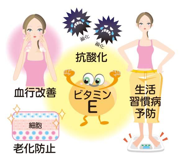 エストロゲンの作用を促す効果があるビタミンE