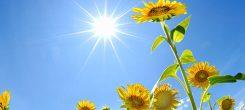 太陽とサンフラワー