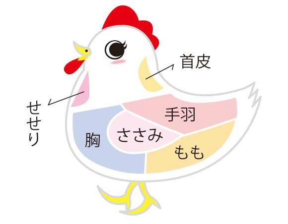 鶏肉の各部位