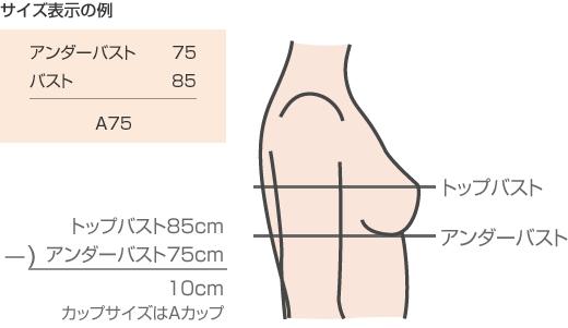 バストのサイズ表示の例