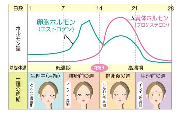 生理周期と女性ホルモン量の関係を表したグラフ
