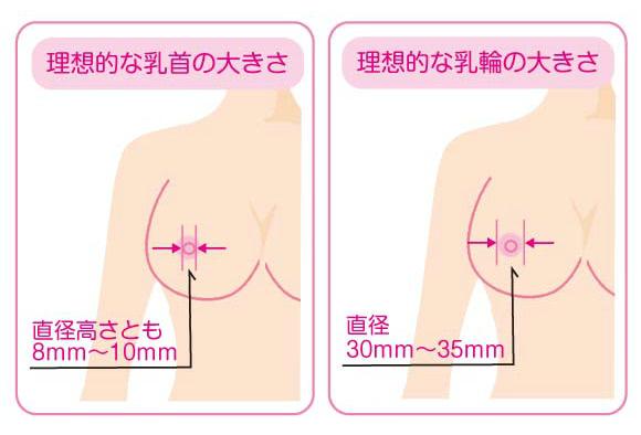 理想的な乳首と乳輪の大きさ