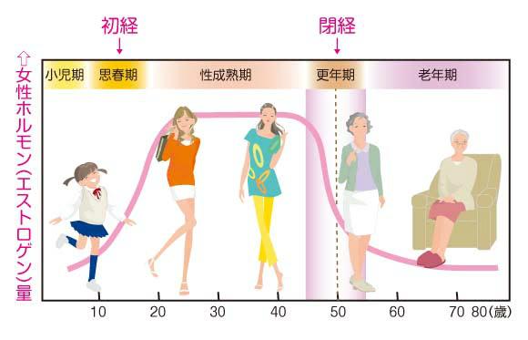 エストロゲンの年齢による分泌量の変化