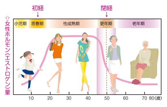 女性ホルモンの年齢別分泌量