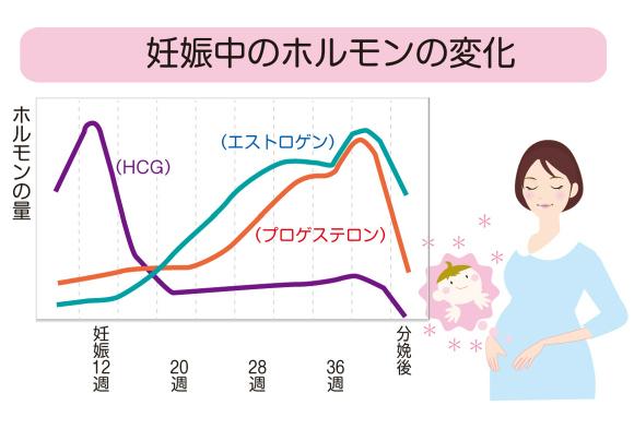 妊娠中のホルモンの変化