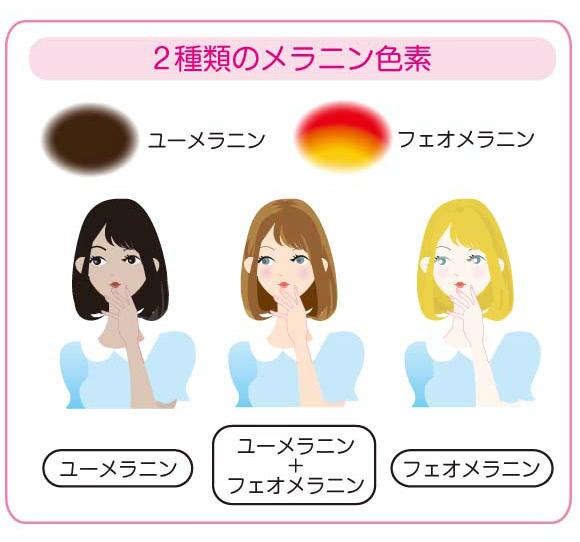 2種類のメラニン色素