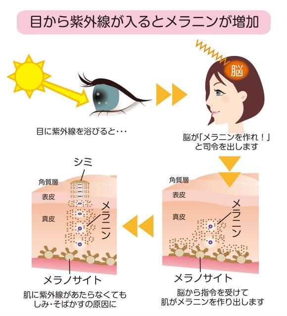 目から紫外線が入るとメラニンが増加