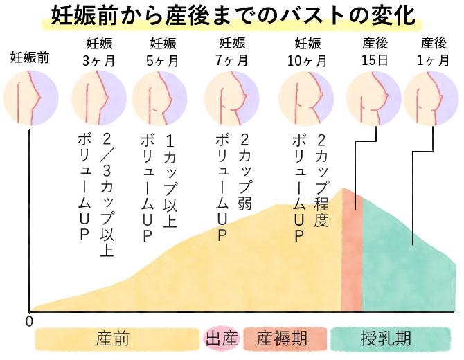 妊娠前から産後までのバストの変化