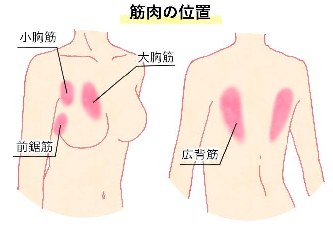 筋肉の位置