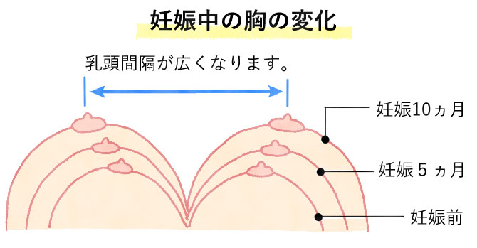 妊娠中の胸の変化