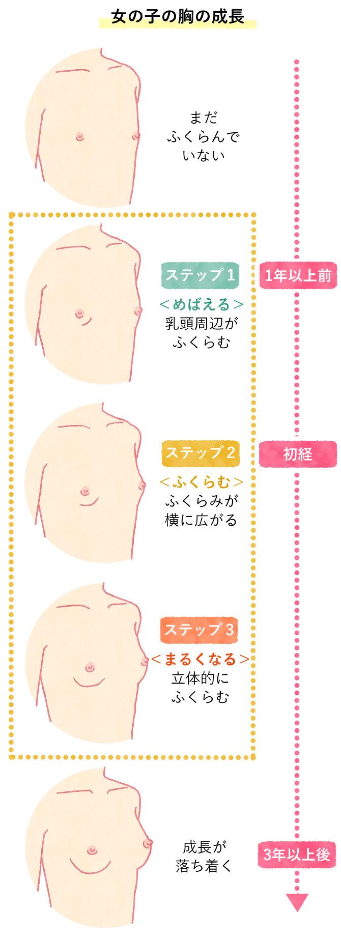 女の子のバストの成長の過程